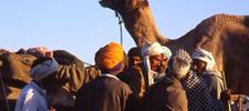 Pushkar India and the Pushkar Camel Fair