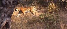 Destination Rathambhore National Park